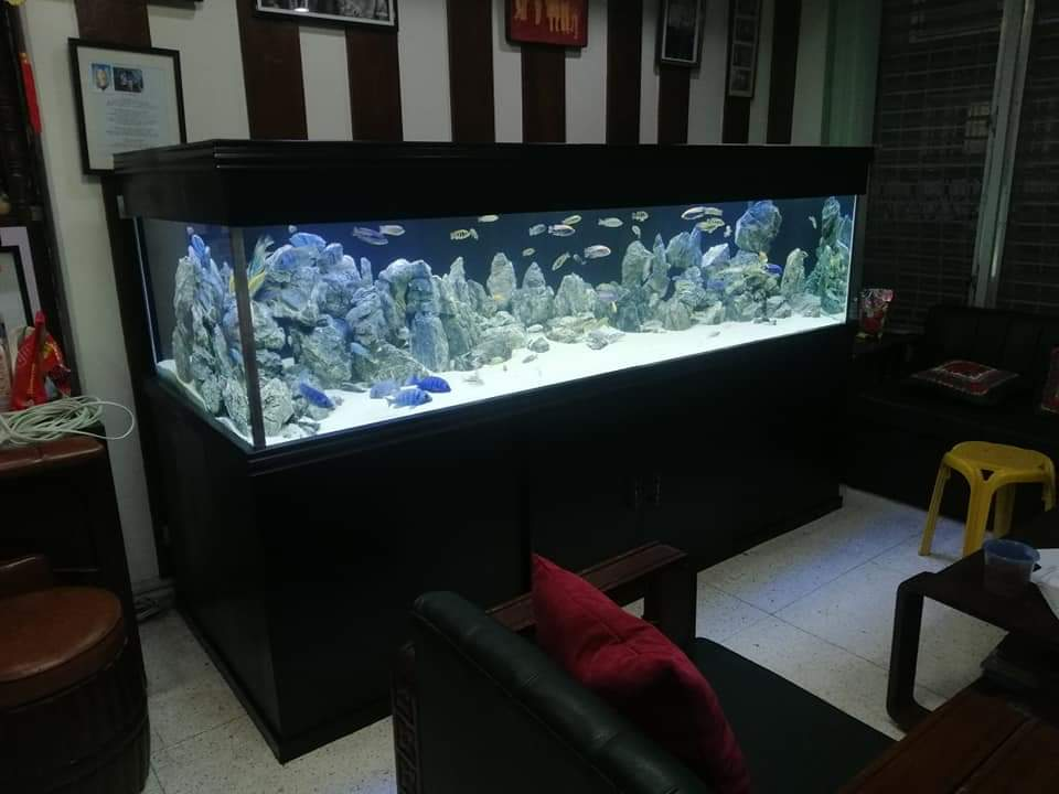 6 feet L * 2 Feet hight * 2 Feet Width Custom Made Extra Clear Toughened Glass Aquarium, with custom made cabinet and top cover